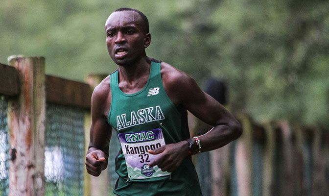 Edwin Kangogo, shown here at the GNAC Championships, earned his third cross country All-American award. He was 30th in 2015 and 34th in 2016. Photo by Nick Danielson.