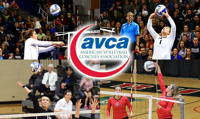 The four AVCA First Team All-West Region honorees, clockwise from top, Western Washington's Abby Phelps and Brette Boesel and Northwest Nazarene's Kendra Bodine and Madi Farrell.