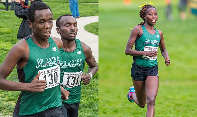 Alaska Anchorage returns four All-Americans from 2015, including Henry Cheseto (left), Edwin Kangogo and Joyce Chelimo. Photos by Dan Levine.